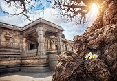 picture of vijayanagara  - Old tree with white flowers near ancient ruins of Vijayanagara Empire at blue sky in Hampi Karnataka India