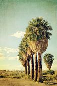 image of row trees  - Palm trees in a row in a blue sky - JPG