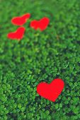 stock photo of red clover  - Red paper hearts in green clover - JPG