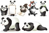 stock photo of panda  - Illustration of the seven pandas on a white background - JPG