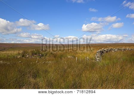Rushes And Heather Landscape