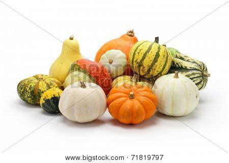 colorful pumpkin and squash collection isolated on white background