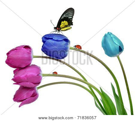 Dewy tulips with butterfly and ladybugs