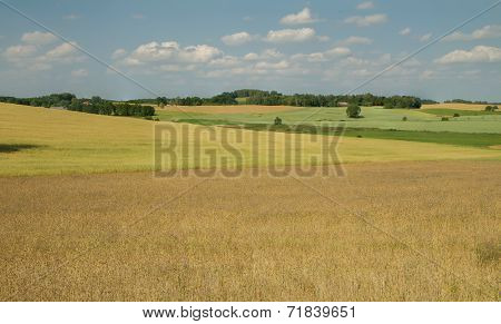 Beautiful Fields