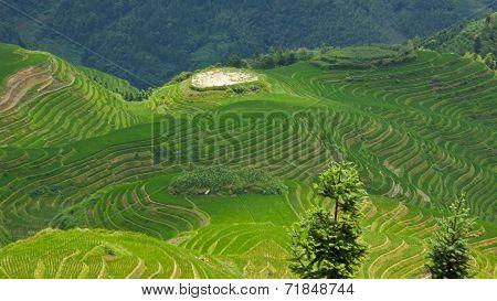 Jongli Rice Terraces in Guilin, China