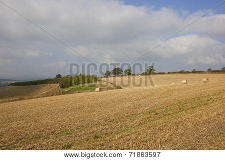 Upland Harvest