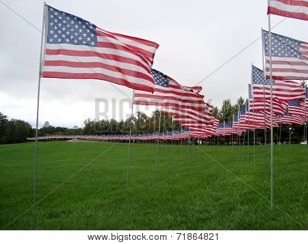 American Flags In Saint Louis, Missouri In Honor Of 13Th Anniversary 9/11 Attacks