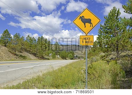 Bighorn sheep crossing safety sign on road