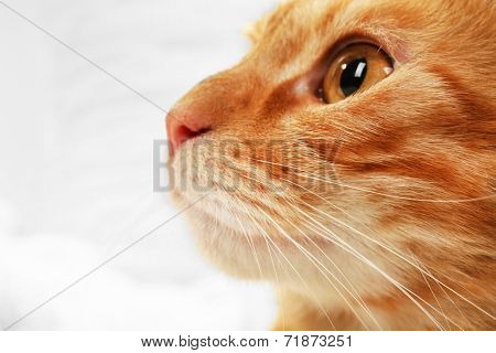 Red cat on towel on fabric background
