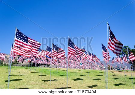 American Flags On A Field