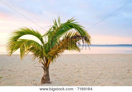 The Sunset Beach