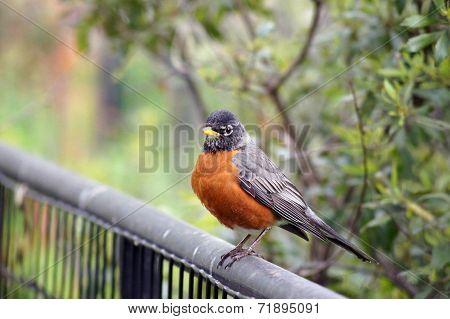 A bird perched on a rail