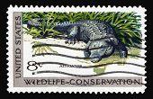 Alligator 1971