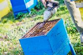 pic of pry  - Beekeeper checking the box  - JPG
