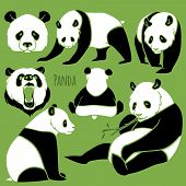 pic of panda  - Set of Vector Asia Panda silhouettes black and white - JPG