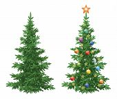 picture of orange-tree  - Christmas holiday spruce fir trees - JPG