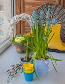 picture of cowslip  - Hyacinth and primrose blooming in the window - JPG