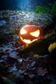 stock photo of jack-o-laterns-jack-o-latern  - Glooming pumpking halloween latern with lit candle on tree root with fallen leaves around - JPG