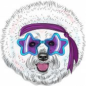 stock photo of headband  - hipster Star Disco dog Bichon breed in fashionable glasses - JPG