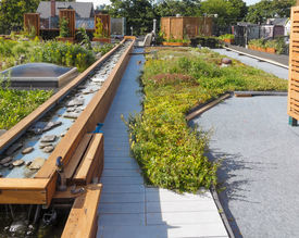 image of photosynthesis  - Rooftop garden in urban setting under blue sky - JPG