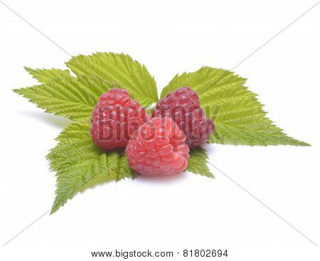 Three Raspberries With Leafs Isolated On White