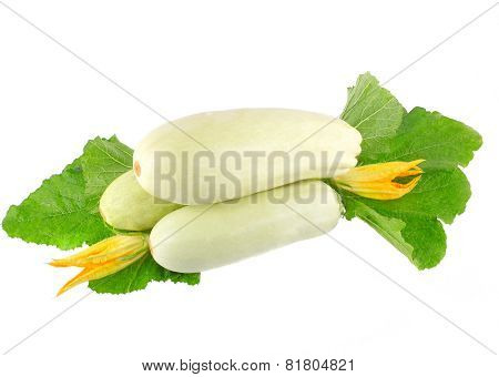 White Vegetable Marrow On White Background.