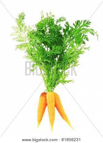 Fresh Carrot With Green Branch . Isolated.