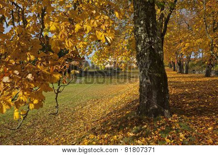 Close up on autumn leaves, chestnut trunk and a garden park.