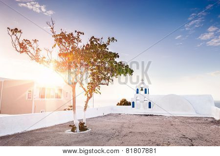 Beautiful Tree In The Town Of Oia At Sunset