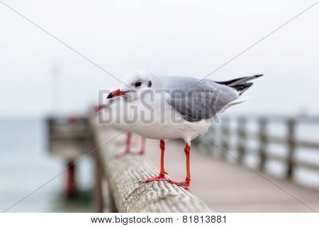 Seagull at Pier Handrail