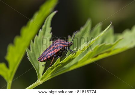 Bug Sitting On A Green Leaf