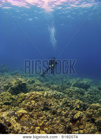 Woman Diving On Top Of The Reef