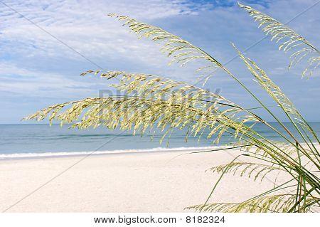 Bonita Beach In The Morning