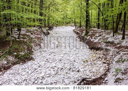 Dry River In Forest