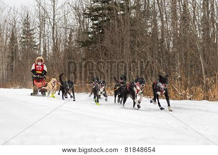 Beargrease 2015 Mid Distance Billie Diver On Trail
