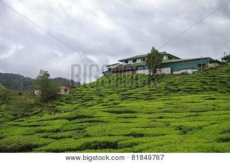 House At The Tea Plantation