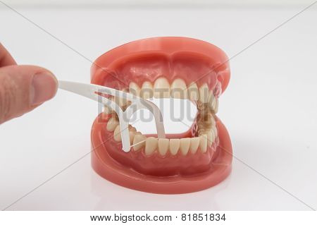 Man cleaning false teeth with dental floss