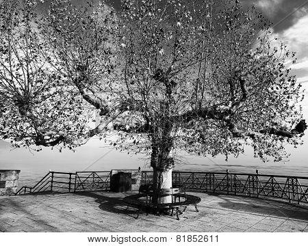 Tree on panoramic place
