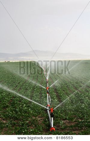 Irrigation Sprinklers Water A Farm Field Against Late Afternoon Sun