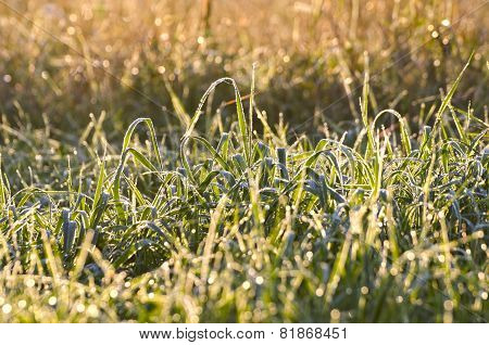 Blur Dewy Summer End Meadow Grass Background With Water Drops