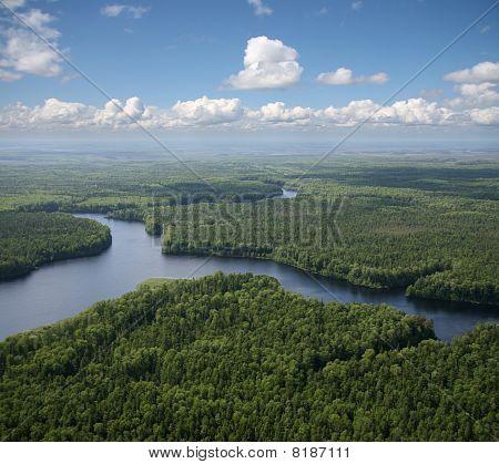 Green Forest Plain