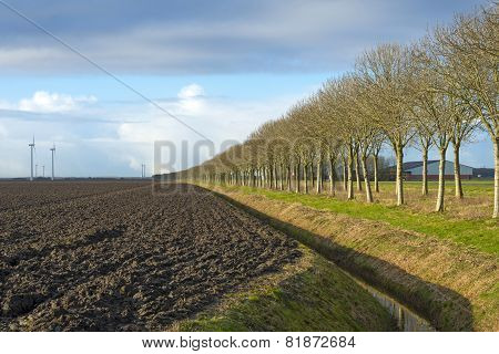 Row of trees along a plowed field in winter