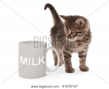 Kitten With White Cup