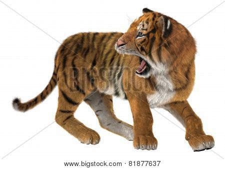 Roaring Tiger