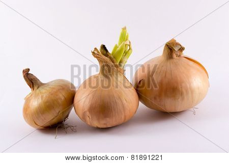 Three onions with skins on on a white background