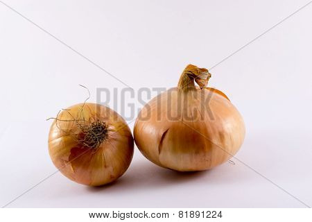 Two single onions with their skins still attached