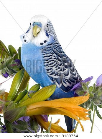 parrot sits on a flower