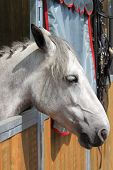 stock photo of stable horse  - Portrait of a white horse in stable - JPG