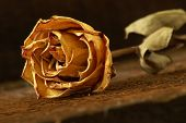 image of keepsake  - A closeup shot of a dried rose laying on some textured wood - JPG