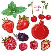 picture of blackberries  - Vector set with pomegranate strawberry mint cherry raspberry blackberry - JPG